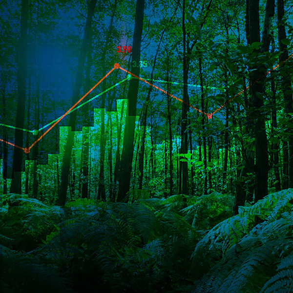 Red and green line graph points on a forest scene