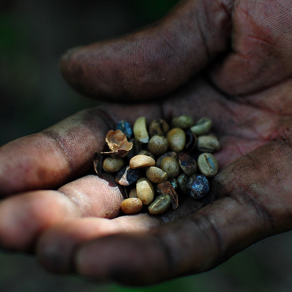 A dirty hand holding seeds in his palm